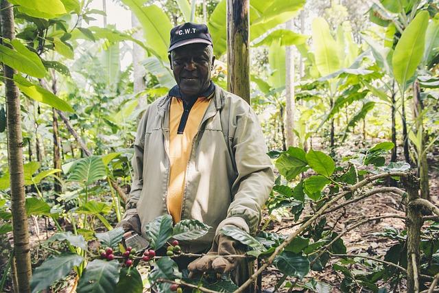タンザニアのコーヒー農園